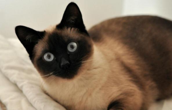 猫是色盲吗